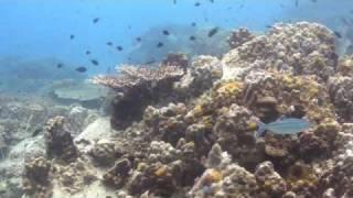 Diving Koh Samui(Tauchen mit Calypso Diving Koh Samui vor Koh Tao am 16.-17.08.2009 Für mehr Informationen zum Tauchen Koh Tao und Tauchen Koh Samui, Chumporn ..., 2009-08-20T07:50:14.000Z)