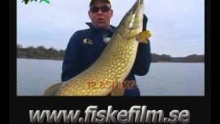 """Gäddfeber - Jerkbait fiske efter stor gädda """"Special Edition 2009"""" - Trailer"""