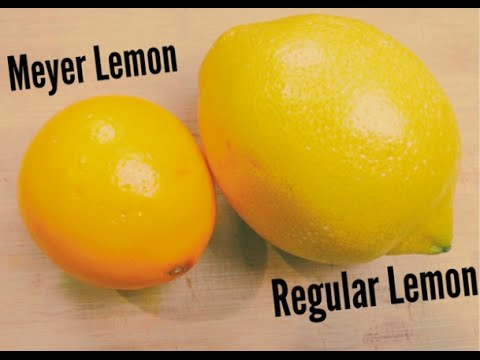 Meyer Lemon Recipe Ideas Youtube