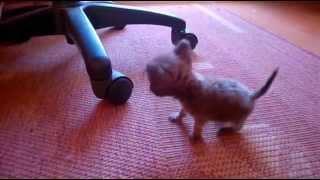 Очень маленькая собачка