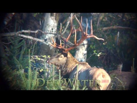 7 point giant bull elk hunting. DeepWater Kapowsin Washington