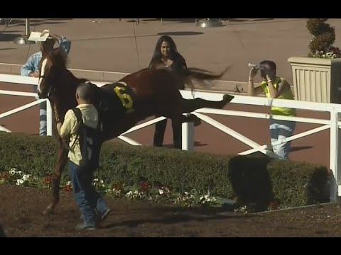 Horse Nearly Kicks Fan at Santa Anita | February 05, 2015