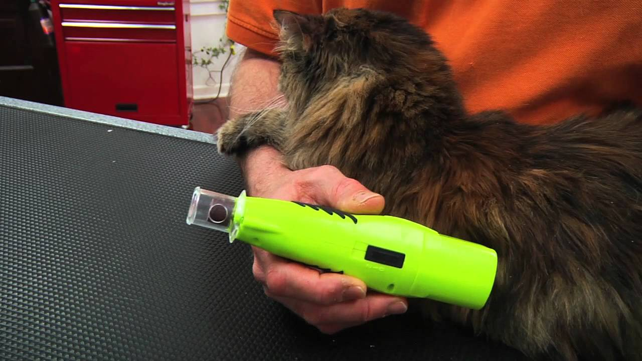 FURMINATOR NAIL TRIMMING DEMO FOR CATS - YouTube