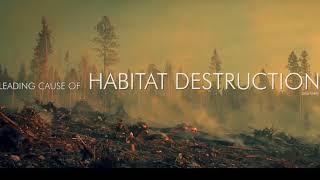 El secreto que las ONGs, Gobiernos y Corporaciones ocultan - COWSPIRACY el documental (sub-esp) HD thumbnail