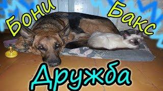 Дружба кота и собаки // Любовь животных // Жизнь в деревне