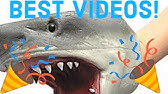 BEST SHARK PUPPET VIDEOS COMPILATION *NEW*