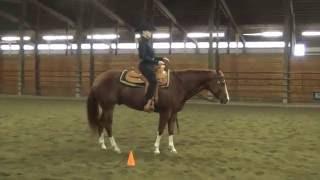 Ellie Becker, Horsemanship Schooling 2 (Green Horse)