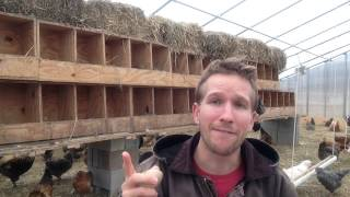 Getting Chickens To Lay Eggs Inside Nesting Boxes