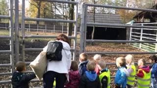 Zagroda Żubrów i innych zwierząt - Słoneczka