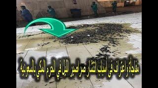 مفاجأة واعتراف فى أسباب انتشار صراصير الليل في الحرم المكي بالسعودية