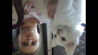 Самая дорогая кошка за бесплатно!!!Мне подкинули котёнка као мани!/Arina Fox
