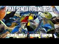 Pikat Semua Jenis Burung Kecil Anti Gagal Anti Zonk  Mp3 - Mp4 Download