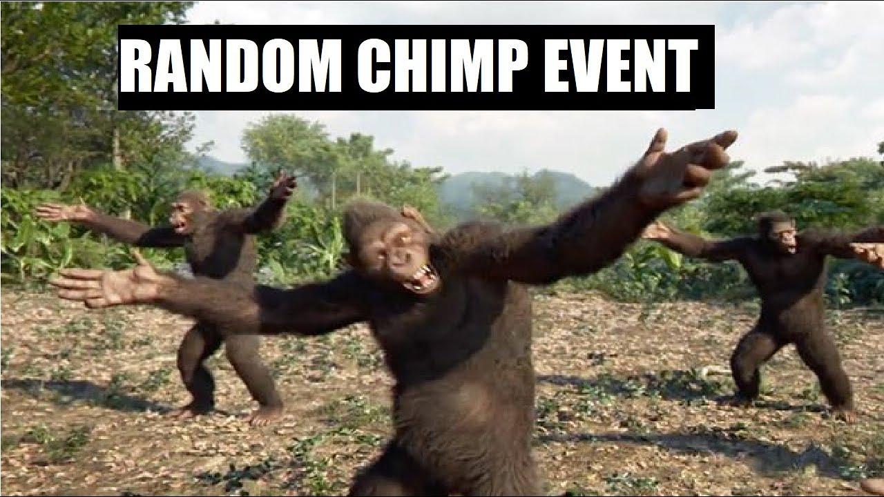 Random Chimp Event!