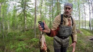 Северная Карелия 2016, у Тимы(, 2016-06-17T06:16:01.000Z)
