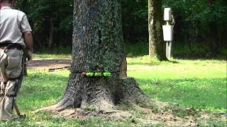 Wedging A Back Weighted Tree