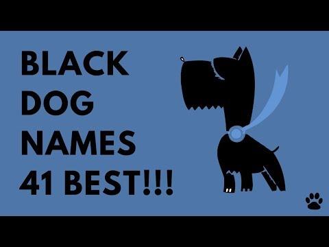 Black Dog Names - 41 BEST & CUTE IDEAS!!! | Names