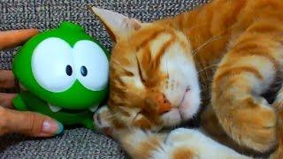 видео Купить игрушечного Ам Няма (Om Nom) в интернет-магазине Super01