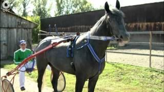 Последние тренировки. Как готовят элитных лошадей к Всероссийскому турниру?