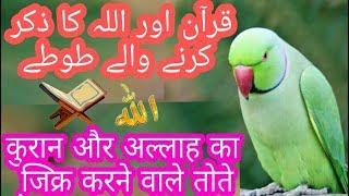 Parrot saying ALLAH HU AKBAR , SUBHAN'ALLAH , ALLAH HU   parrot reciting KALMA