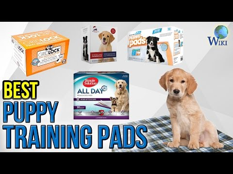 10 Best Puppy Training Pads 2017