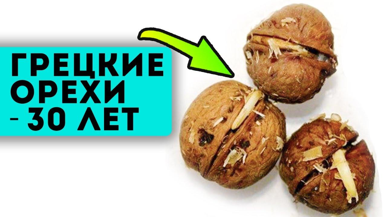 97% людей едят грецкие орехи неправильно! Орехи запустят время вспять, если их...
