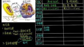 1-2觀念12真核細胞與原核細胞的比較