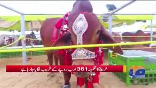 Eid-e-Qurban Par Pichley Saal Ki Nisbat Zyada Janwaron Ki Qurbani – Geo Pakistan