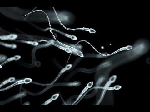 Study reveals 60% drop in fertility since 1970