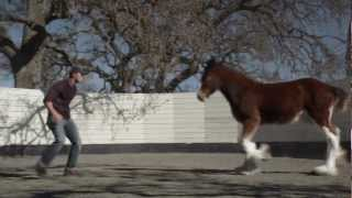 hd clydesdales 2013 budweiser super bowl ad extended version of brotherhood