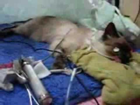 Permethrin poisoning in cats | International Cat Care
