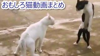 CAT'S EYE~ 猫のおもしろ動画まとめ ~世界のドジ猫ちゃん~ https://w...