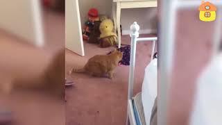 Смешные коты и кошки. Смотреть ВСЕМ. Ну очень смешно.