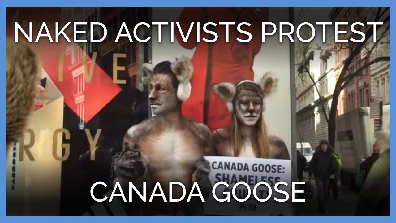 canada goose jackets kills animals