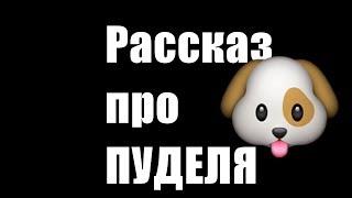 Пудель. Рассказ про пуделя.#собаки#пудель