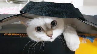 참치선물세트에 고양이가 딸려왔어요 (니가 왜 거기서 나…