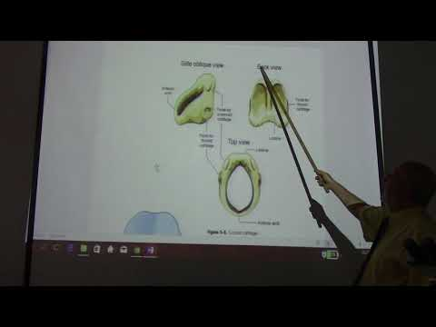 anatomy of the larynx pt1 by Dr.Wahdan