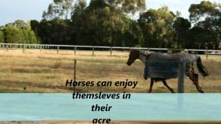 Lorrijon Farm Horse Agistment Pet Sitting Geelong