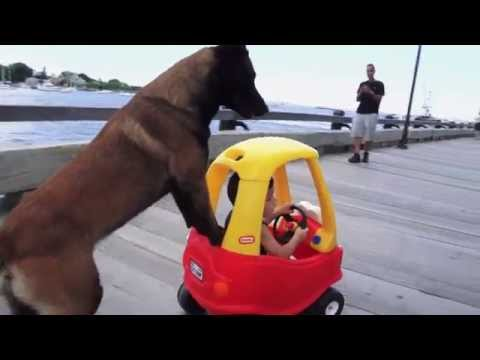 Don't Touch This Kid's Car! Protection Dogs Plus Teach a Belgian Malinois a Cool Trick