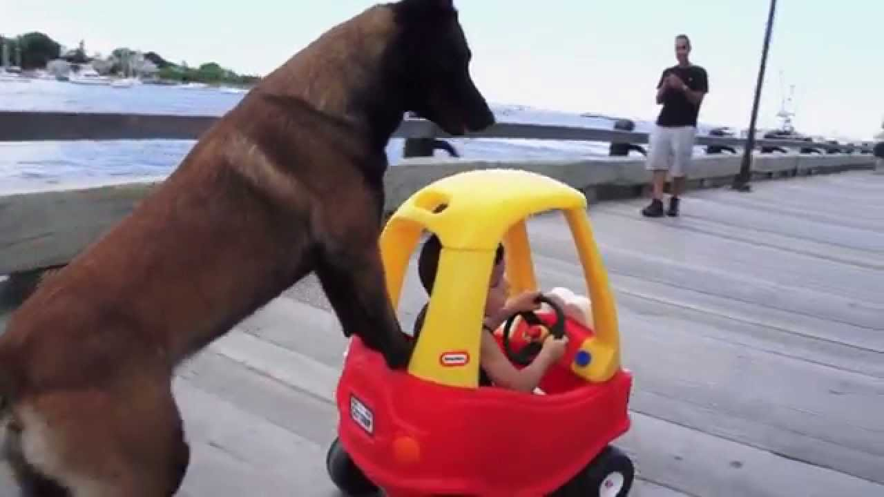 Don T Touch This Kid S Car Protection Dogs Plus Teach A
