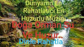 Dünyanın En Huzurlu Müzigi Doğa Orman Şelale 3-1 Arada Uyurken Dinle
