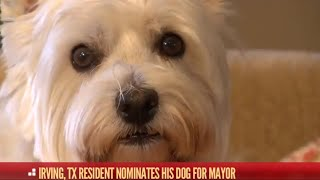 Animals Running for Political Office |