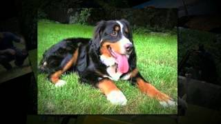 Dog Training New Jersey