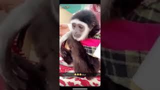 يتضارب مع مين ؟!😂 القرد يشرب شاهي 😂😂 ،،،سنابات أسامه الدغيري