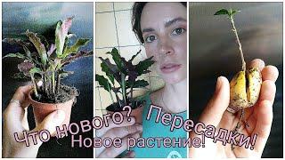Мои комнатные растения!🌿 Новая растюха/ Пересадки/ Черенкование Монстеры/ Цитокининовая паста/