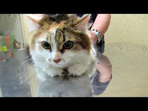 Что случилось после стерилизации кошки?