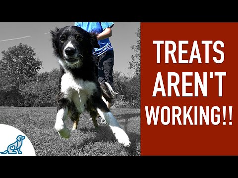 Here's What To Do When Treats Aren't Working in Dog Training