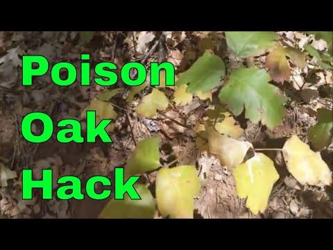 Poison Oak Identification, Prevention, And Treatment