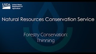 Forestry Conservation Thinning