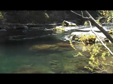 FlyFishing The McCloud River