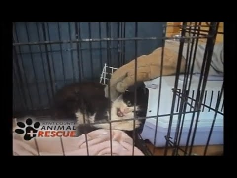 CAT SHOT BY PELLET GUN Animal rescue Season one Episode 2